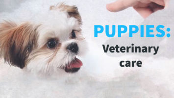 Puppies – Veterinary Care