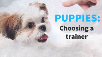 Puppies – Choosing a Trainer