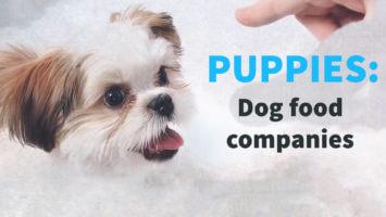 Puppies – Dog Food Companies