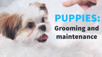 Puppies – Grooming and Maintenance