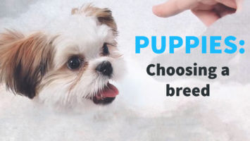 Puppies – Choosing a Breed