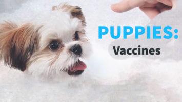 Puppies – Vaccines