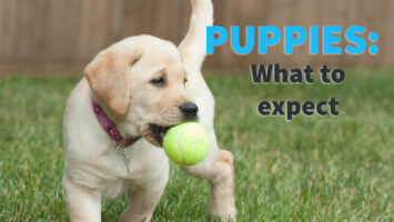 Puppies – What to Expect