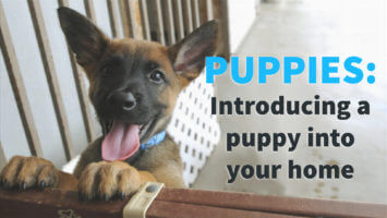 Puppies  – Introducing a Puppy Into Your Home