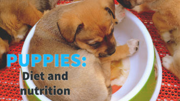 Puppies – Diet and Nutrition
